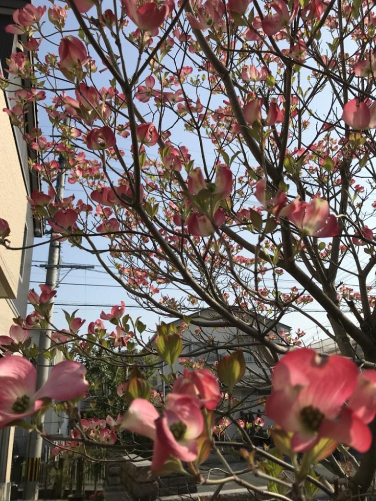 image 春がきたっ!!